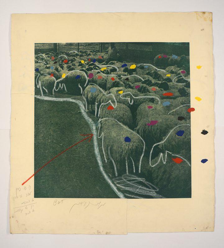 """מנשה קדישמן, הדפס ניסיון של """"כבשים במכלאה"""" (1981), תצריב צילומי והדפס-רשת, גובה 85 ס""""מ, רוחב 78.5 ס""""מ (עם הערות הדפסה בעפרון ופסטל)"""